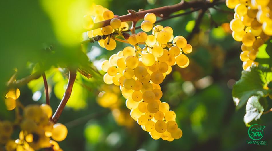 کنسانتره میوه